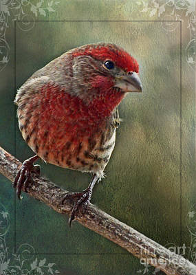 Male Housefinch With Green Texture And Decorations Art Print by Debbie Portwood