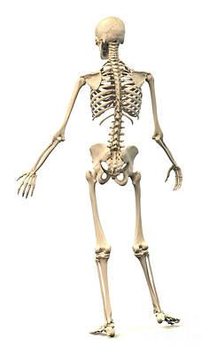Male Human Skeleton In Dynamic Posture Art Print by Leonello Calvetti
