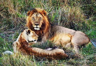 Head Photograph - Male Lion And Female Lion. Safari In Serengeti. Tanzania. Africa by Michal Bednarek