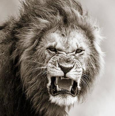 Masai Mara Photograph - Male Lion I Masai Mara Kenya by Regina Mueller