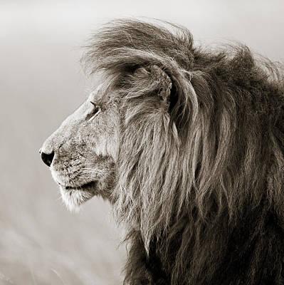 Male Lion IIi Masai Mara Kenya Art Print by Regina Mueller