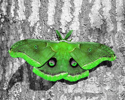 Selective Color Digital Art - Male Moth Green by Al Powell Photography USA