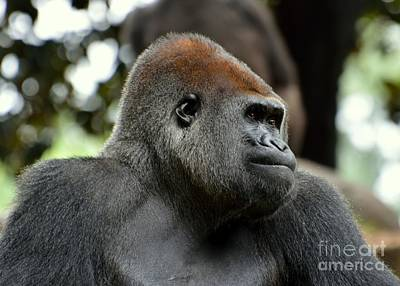 Art Print featuring the photograph Male Silverback by Lisa L Silva