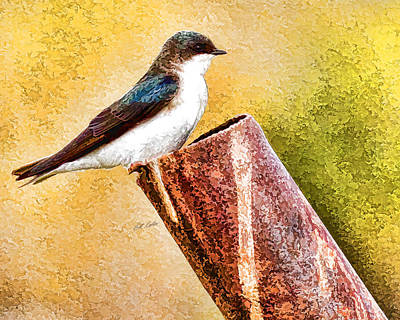 Male Tree Swallow No. 2 Art Print by Bill Kesler