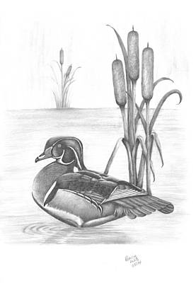 Drawing - Male Wood Duck by Patricia Hiltz