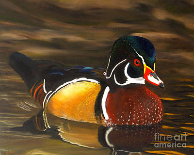Male Wood Duck Portrait Art Print
