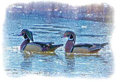 Wood Duck Profile Photograph - Male Wood Ducks by Constantine Gregory