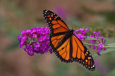 Photograph - Male_monarch_8834 Op by Tom Culver