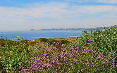 Wildflowers Photograph - Malibu by Lynn Bauer