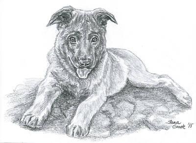 Drawing - Malinois Pup by Jana Goode