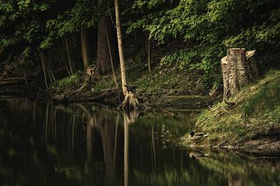 Photograph - Mallard And Pond by Steven Mancinelli