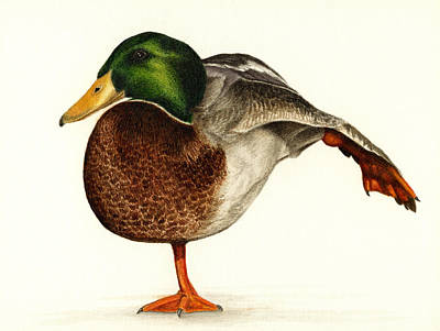 Mallard Ducks Painting - Mallard Ballet by Pat Erickson