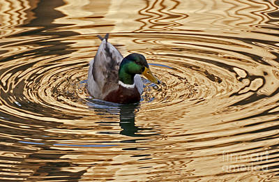 Photograph - On Golden Pond by Kate Brown