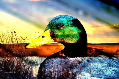 Photograph - Mallard Duck In Wilderness by Annie Zeno