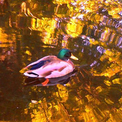 Photograph - Mallard Duck On Pond 1 by Amy Vangsgard