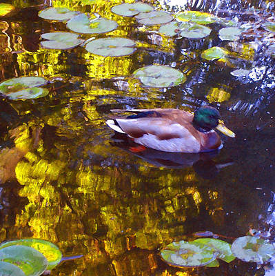 Duck Painting - Mallard Duck On Pond 2 by Amy Vangsgard