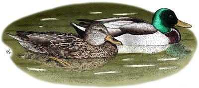 Photograph - Mallard Duck Pair by Roger Hall