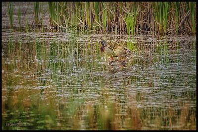 Photograph - Mallard Duck Reflections by LeeAnn McLaneGoetz McLaneGoetzStudioLLCcom