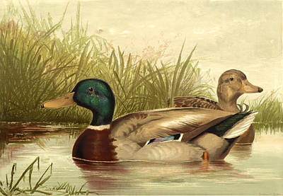 Mallard Duck Painting - Mallard Ducks by Gary Grayson