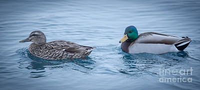 Photograph - Mallard Ducks - Male And Female by Ronald Grogan