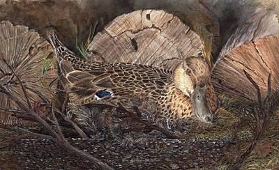 Mallard On Nest Print by Dana Spring Parish