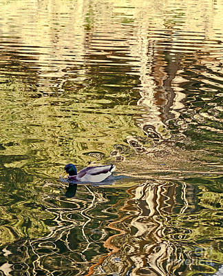 Art Print featuring the photograph Mallard Painting by Kate Brown