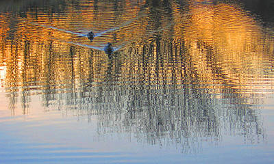Mallard Pair At Kah Tai Lagoon Art Print by Laurie Stewart