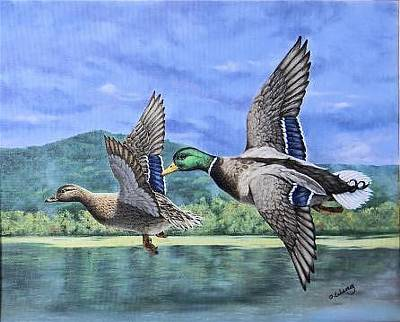 Painting - Mallards by Olga Wing