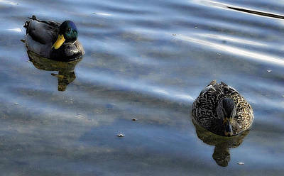 Photograph - Mallards by Randal Bruck