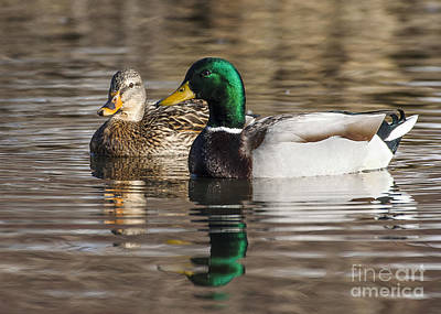 Photograph - Mallards by Steven Ralser
