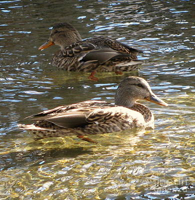 Photograph - Mallards Swimming by Leone Lund