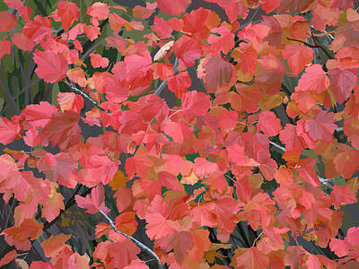 Wall Art - Painting - Mallow Ninebark Fall by Pam Little