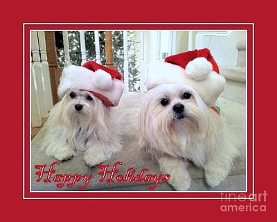 Painting - Maltese Happy Holidays by Shelia Kempf