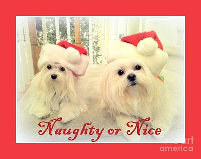 Painting - Maltese - Naughty Or Nice by Shelia Kempf