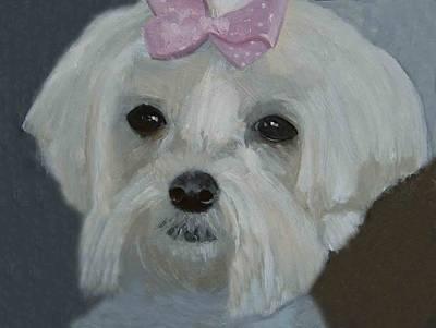 Maltese Dog Original by Angela Inguaggiato