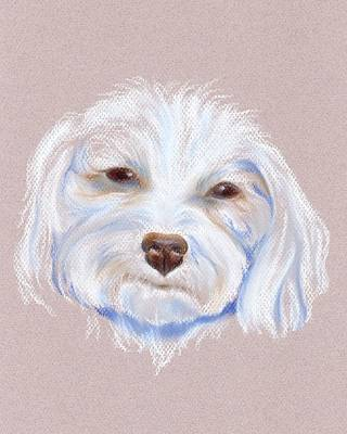 Maltipoo With An Attitude Art Print by MM Anderson