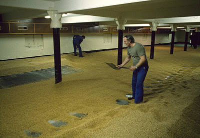 Maltsters Turning The Malt Uk 1987 Print by David Davies