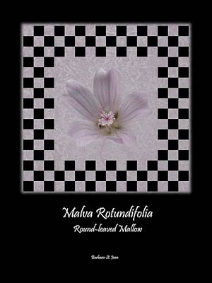 Digital Art - Malva White Wild Flower Poster 1 by Barbara St Jean