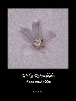 Digital Art - Malva White Wild Flower Poster 2 by Barbara St Jean
