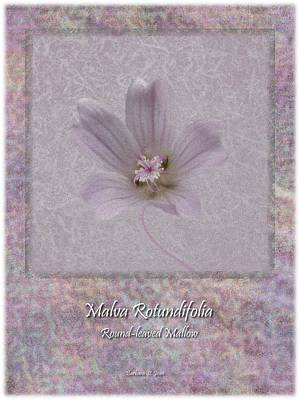 Digital Art - Malva White Wild Flower Poster 4 by Barbara St Jean