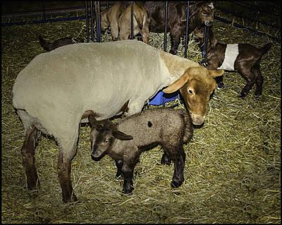 Photograph - Mama And Me Wolcott Farm  by LeeAnn McLaneGoetz McLaneGoetzStudioLLCcom