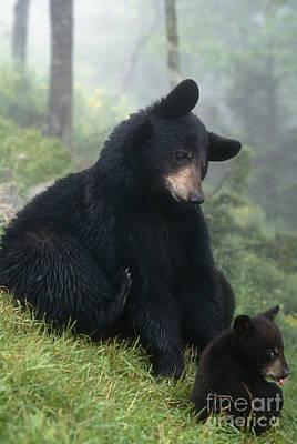 Photograph - Mama Bear Baby Bear - Fs000225 by Daniel Dempster
