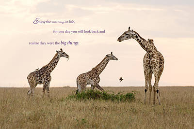 Photograph - Mama Giraffe And The Kids by June Jacobsen