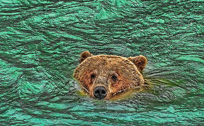 Photograph - Mama Grizzly Going For A Swim by Allen Beatty