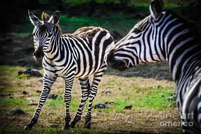 Mama Loves Her New Baby Zebra Art Print