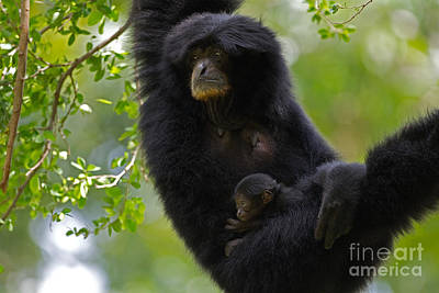 Caring Mother Photograph - Mamas Hammock by Ashley Vincent
