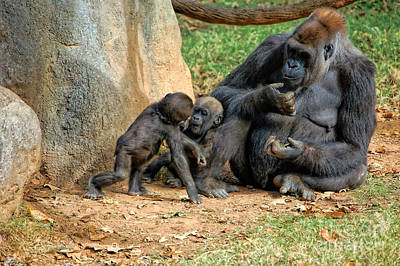 Photograph - Mama's Little Babies by Kathleen K Parker