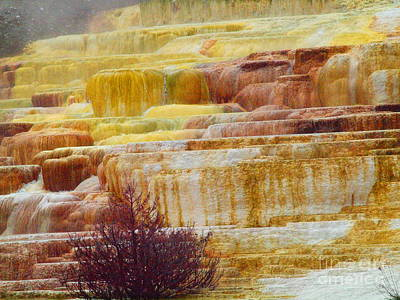 Photograph - Mammoth Hot Springs by Tammy Bullard