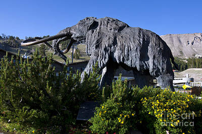 Lovely Lavender - Mammoth Mountain Ski Area by Jason O Watson