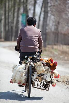 Man And Chickens On A Bike Print by Ashley Cooper